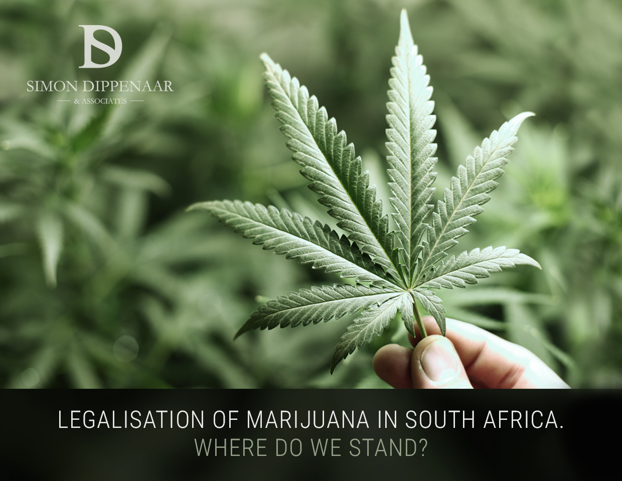 Marijuana Legalisation South Africa