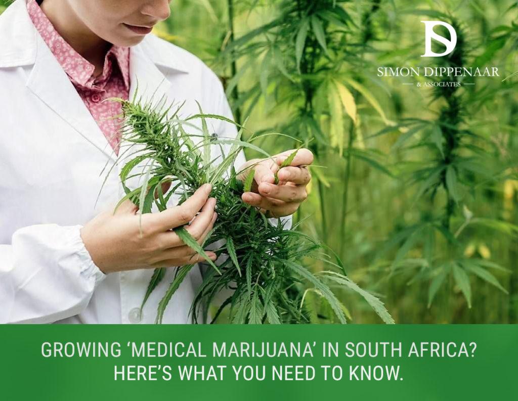 Medical marijuana South Africa