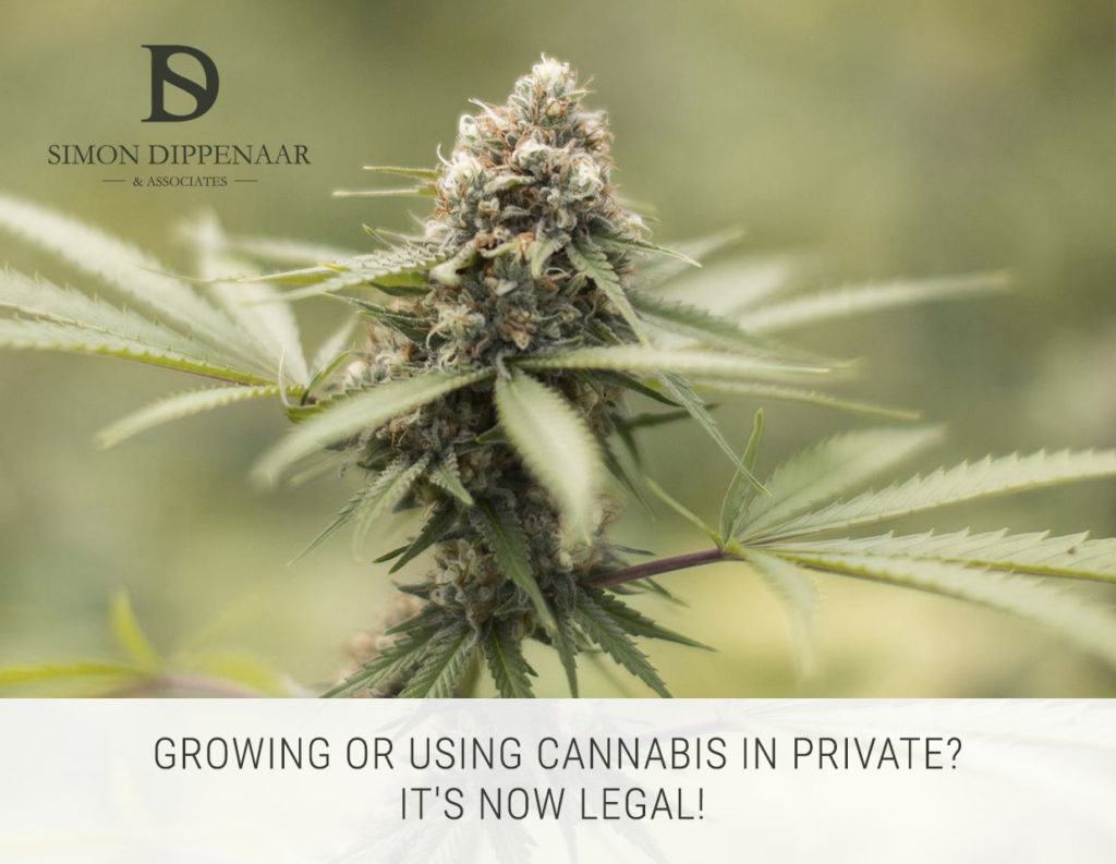 Dagga legalisation in South Africa