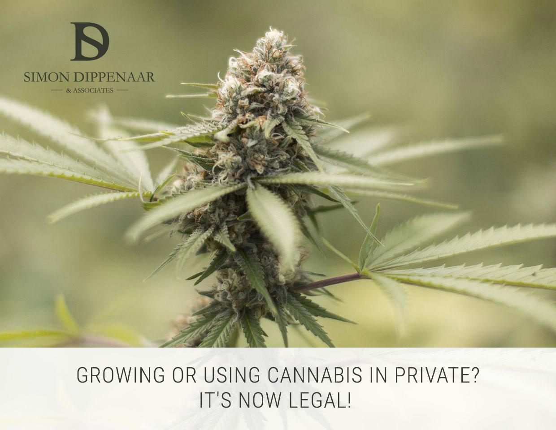 Dagga legalisation in South Africa